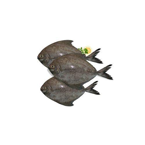 SAK Proteins Fish - Black Pomfret, Medium, 250-500 g Curry cut