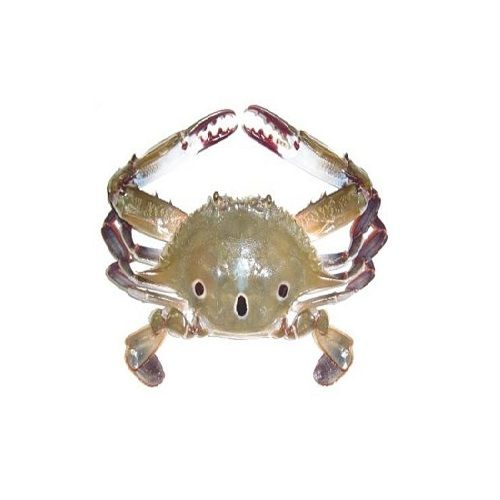 SAK Proteins Crab - 3 Spot, Big (5-8 pcs), 1 kg