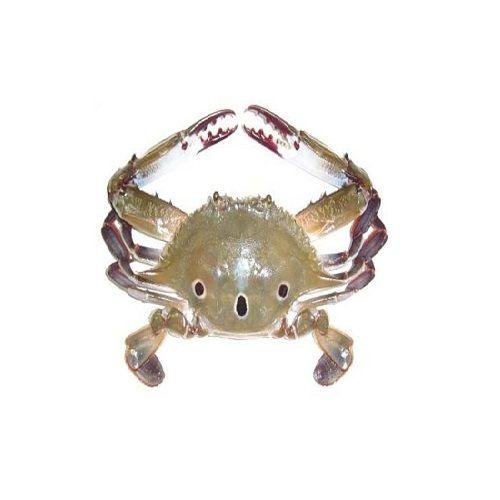 SAK Proteins Crab - 3 Spot, Big (5-8 pcs), 1 kg Curry cut