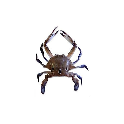 SAK Proteins Crab - 3 Spot, Medium (10 pcs), 1 kg
