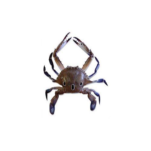 SAK Proteins Crab - 3 Spot, Medium (10 pcs), 1 kg Fry cut