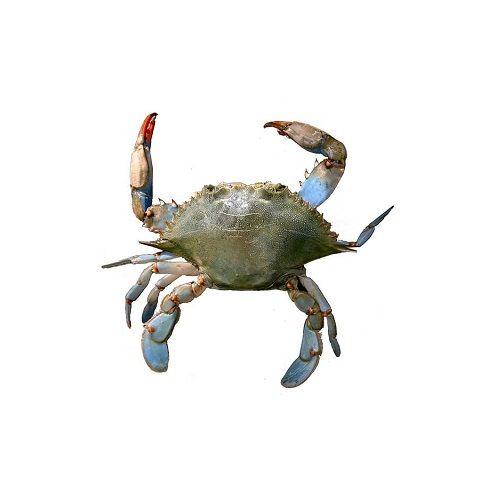 SAK Proteins Crab - Blue, Small (10-15 pcs), 1 kg Fry cut