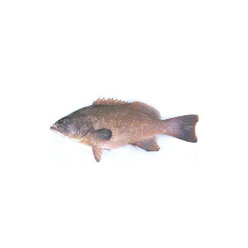 SAK Proteins Fish - Grouper / Kalavai, 1 kg Fry cut