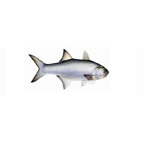 SAK Proteins Fish - Indian Salmon / Kaala, 1 kg