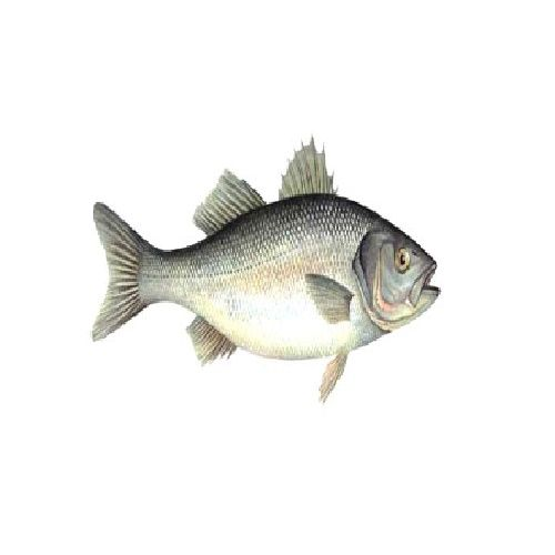 SAK Proteins Fish - Seabass / Original Koduva, 1 kg
