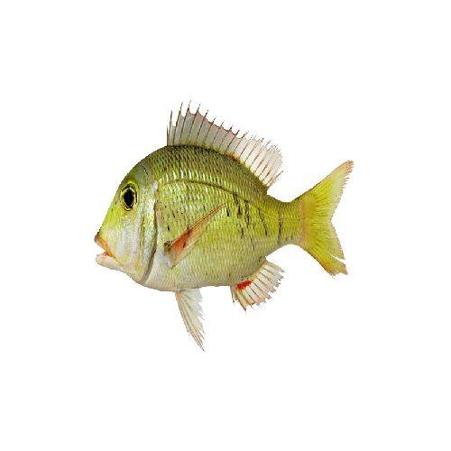 SAK Proteins Fish - Emperor / Vilai Meen, Small, 100-250 g Fry cut