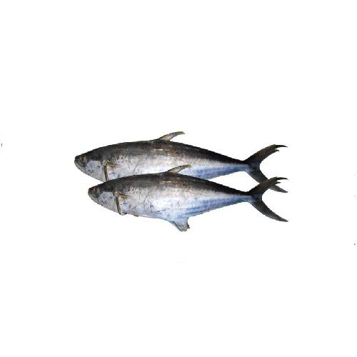 SAK Proteins Fish - Seer, Full, 1-2 kg Curry cut