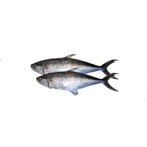 SAK Proteins Fish - Seer, Full, 1-2 kg Fry cut