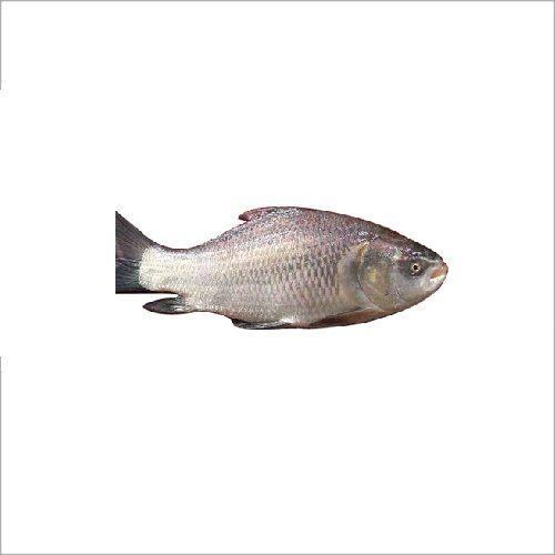 SAK Proteins Fish - Katla, 1 kg Curry cut