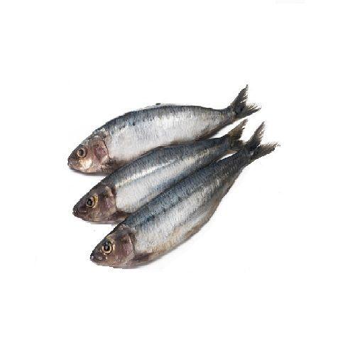 SAK Proteins Fish - Mathi / Sardine, 1 kg Fry cut