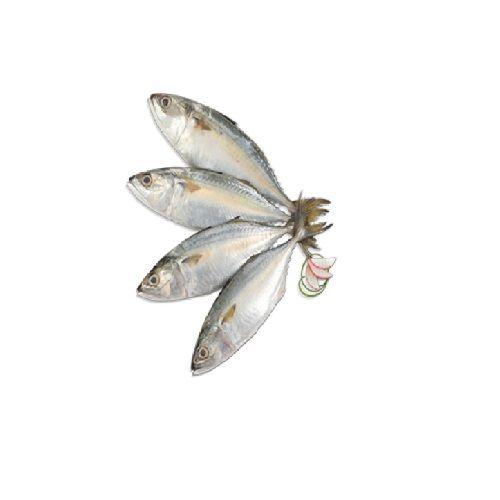 Gala seafood Fish - Indian Mackerel / Ayila, 750 g