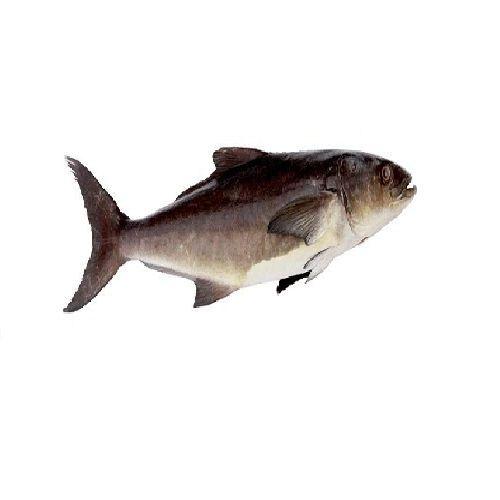 Gala seafood Fish - Kadal Viraal / King, Big, 750 g