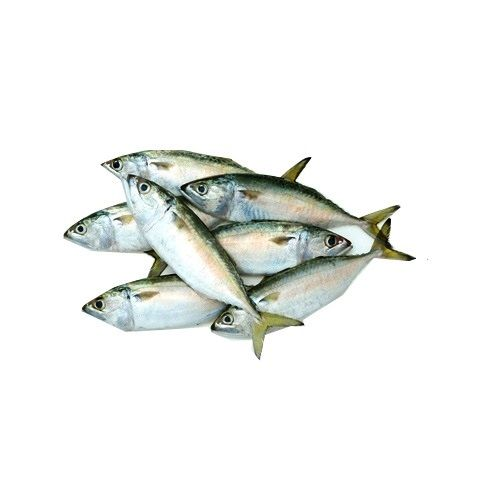 Crazy Fish Fish - Ayalai / Indian Mackerel, 1 kg Gravy cut