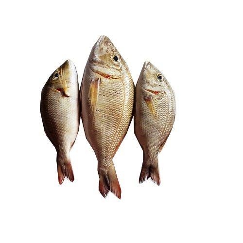 Crazy Fish Fish - Vilai Meen / Emperor, 1 kg Fry cut