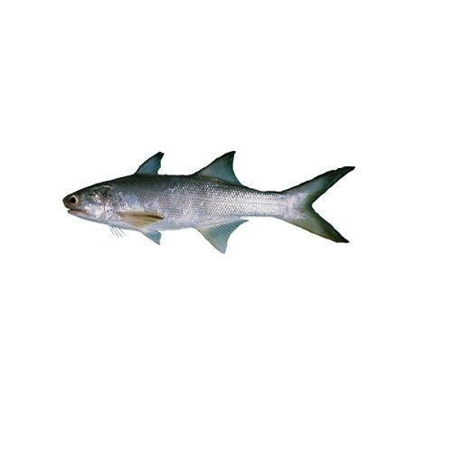 Crazy Fish Fish - Kaala / Indian Solmon, 1 kg Fry cut