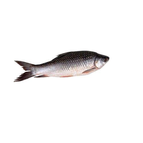 Crazy Fish Fish - Rohu, 1 kg Fry cut