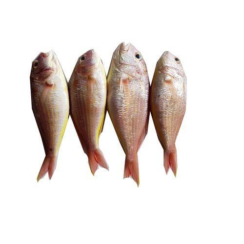 Crazy Fish Fish - Sankara, 1 kg Fry cut