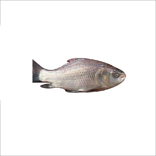 SAK Proteins Fish - Katla, 1 kg