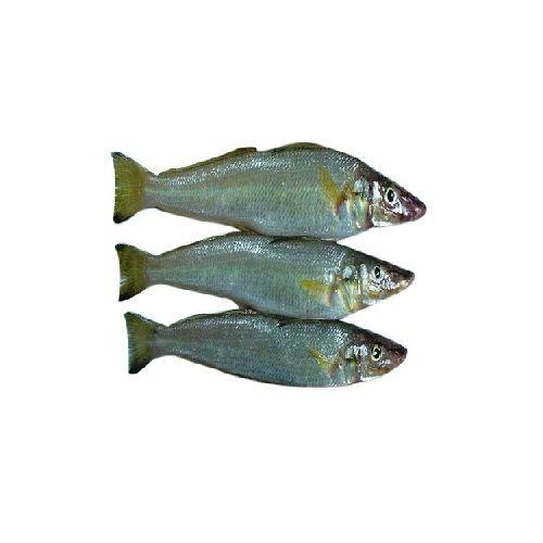 SAK Proteins Fish - Lady Fish Big, 1 kg