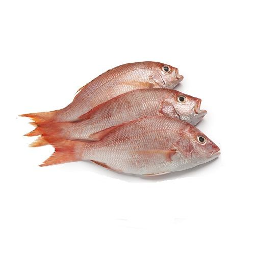 SAK Proteins Fish - Sankara Small, 1 kg