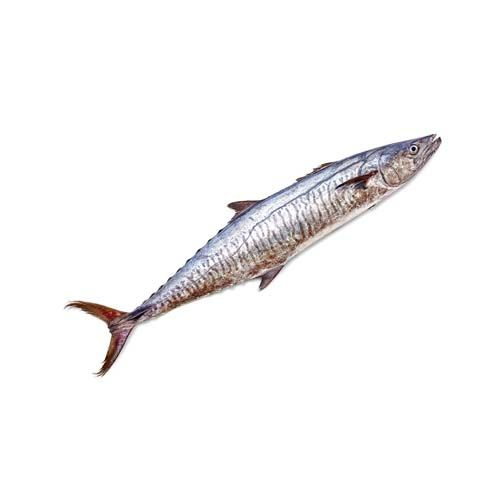 SAK Proteins Fish - Seer Full, 1 kg (1-2 kg size)