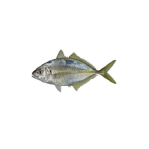 SAK Proteins Fish - Trevally (Paarai) Small, 1 kg