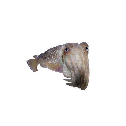 SAK Proteins Fish - Cuttle, Big, 500 g