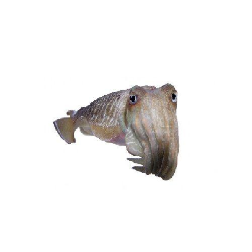 SAK Proteins Fish - Cuttle, Medium, 500 g