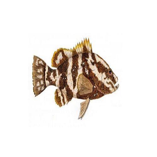 SAK Proteins Fish - Grouper (Kalavai), 500 g