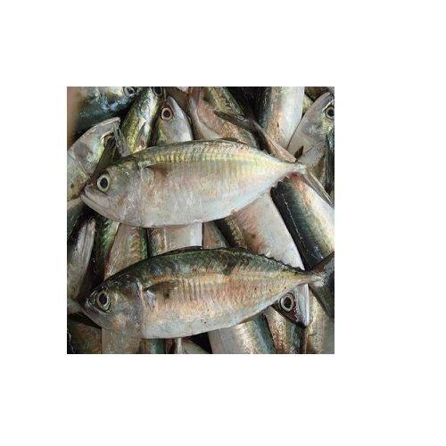 SAK Proteins Fish - Indian Mackerel (Ayalai), 500 g