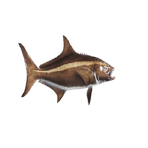 New Fish n Fresh Fish - Kadal Viral / Cobia, 700 g