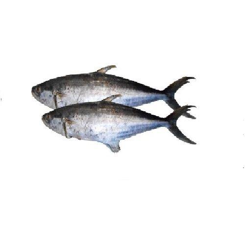 New Fish n Fresh Fish - Seer / Vajiram, 500 g