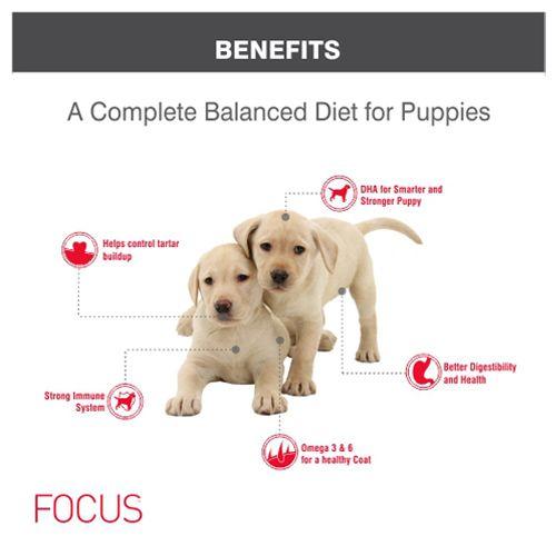 Buy Drools Dog Food Super Premium Focus Puppy 4 Kg Online At Best Price Bigbasket