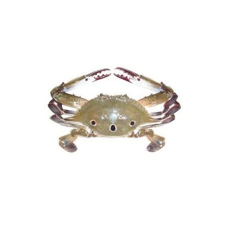 JB Seafoods Crab - Three Spotted, 500 g
