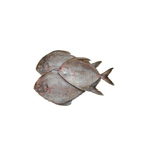 JB Seafoods Fish - Black Pomfret / Karuppu Vavval, 500 g Medium Slice Cleaned