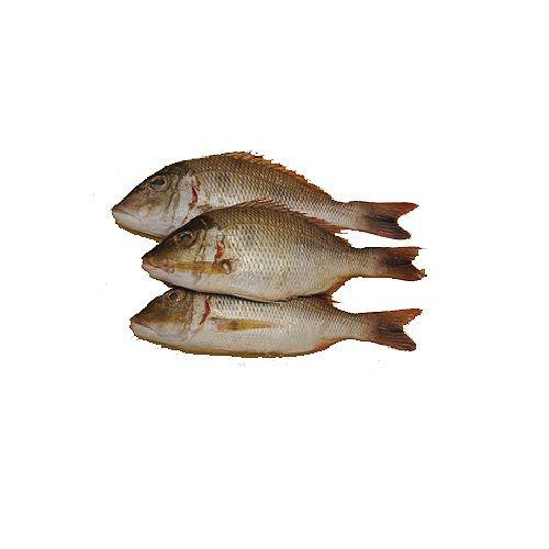 JB Seafoods Fish - Emperor, 1 kg Gravy Cut Cleaned