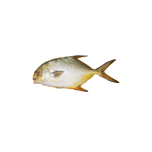 JB Seafoods Fish - Golden Trevally, Without Wastage, 500 g Gravy Cut Cleaned