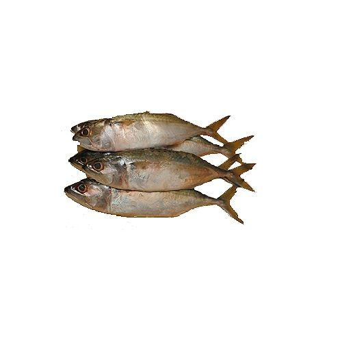 JB Seafoods Fish - Indian Mackerel / Ayila, 1 kg Gravy Cut Cleaned