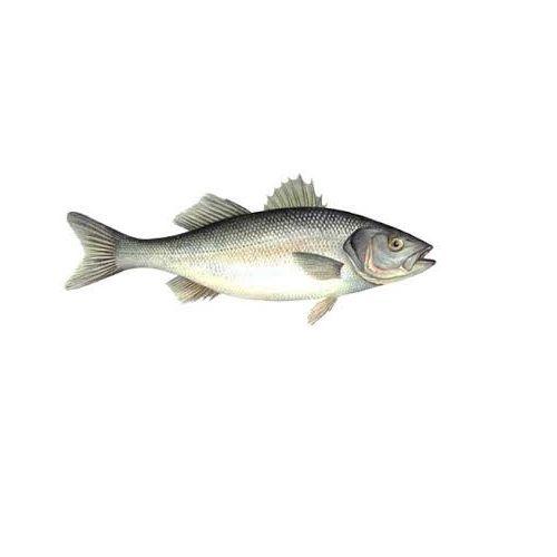 JB Seafoods Fish - Sea Bass / Koduavi, 1 kg Medium Slice Cleaned