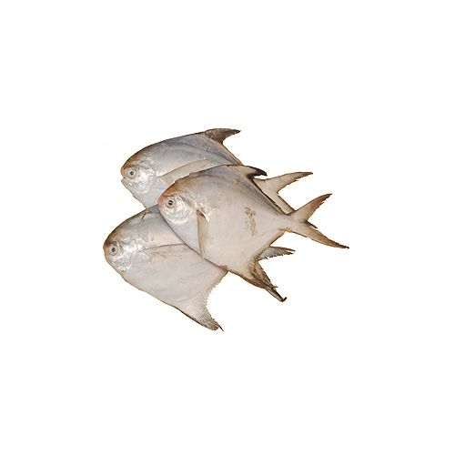 JB Seafoods Fish - White Pomfret, 500 g Curry Cut Cleaned