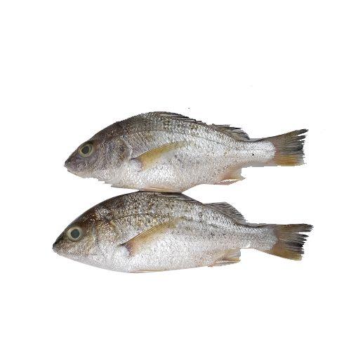 Crazy Fish Fish - Koduva / Seaboss, 1 kg Gravy Cut Cleaned