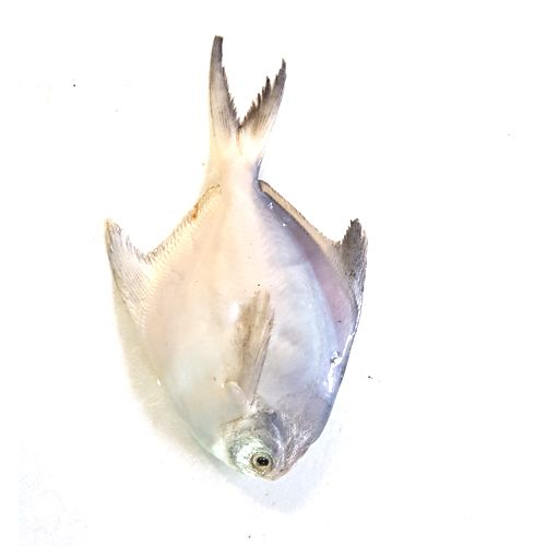 Crazy Fish Fish - Vavval / White Pomfret, 1 kg Fry Cut Cleaned
