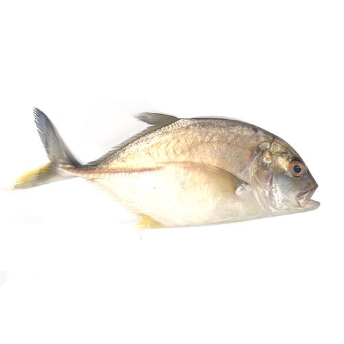 Crazy Fish Fish - Paarai / Trevally, 1 kg Gravy Cut Cleaned