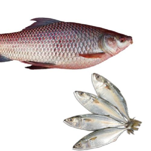 Fiska.in Combo - Rohu Steak & Bangda, 1 kg