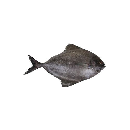Fish Fresho Fish - Halwa / Black Pomfret/Promfret, 2 To 3 Count, 1 kg Steak cut