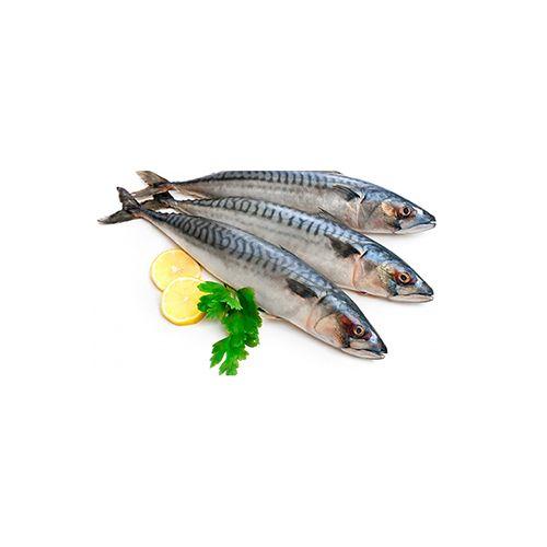 Fish Fresho Fish - Mackerel, 3 To 5 Count, 500 g fry cut