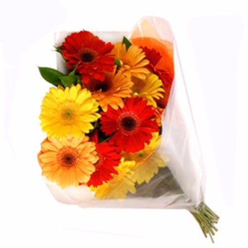 BLOOMS AND BOUQUETS Flower Bouquet - 8 Charming Mixed Gerberas, 1 pc Cellophane