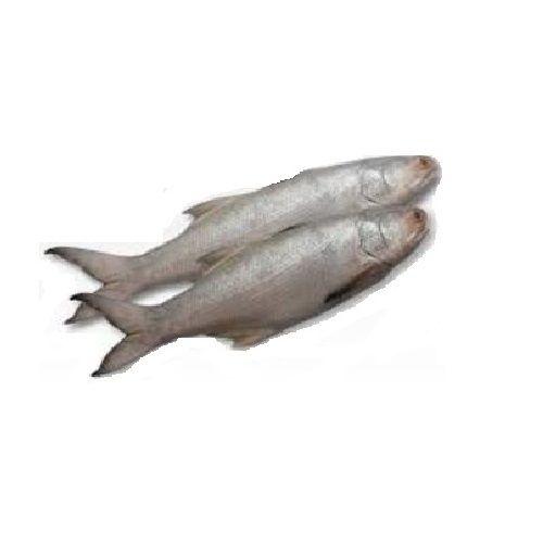 Seavoods Fish Point Fish - Rawas / Salmon, 250 gm Tray