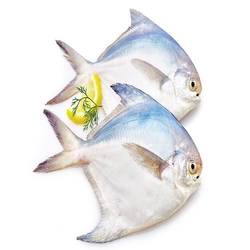 Seavoods Fish Point Fish - Pomfret Silver, Whole - 3 Count, 500 g Tray