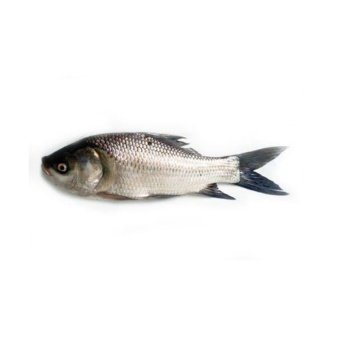 Anand Live Fish Fish - Catla, 2 kg